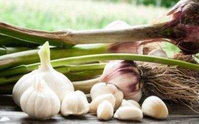 Utilizzare l'aglio contro i parassiti. Si può?
