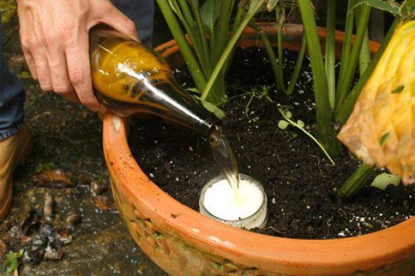 Ecco come utilizzare la birra in giardino