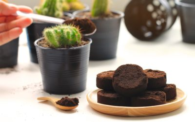 Consigli Biologici: I fondi di caffè come fertilizzante