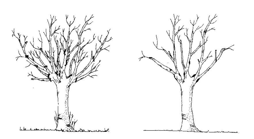 La Potatura In Ambiente Urbano Linea Verde Tree Climbing