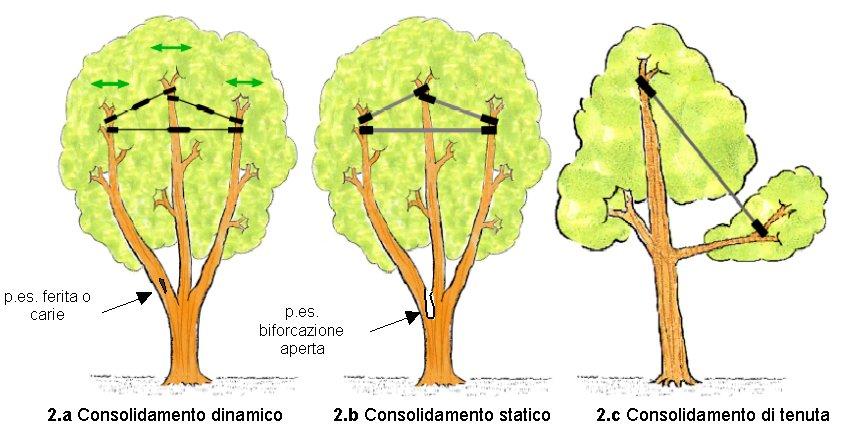 Il consolidamento delle chiome degli alberi